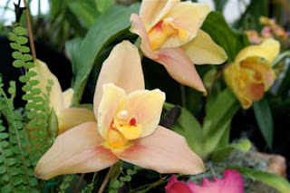 bloomingwriter: gardening in Nova Scotia: Orchids and Workshops in ...