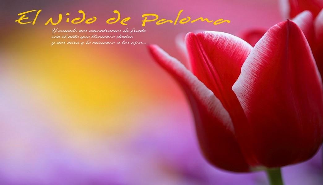 EL Nido de Paloma