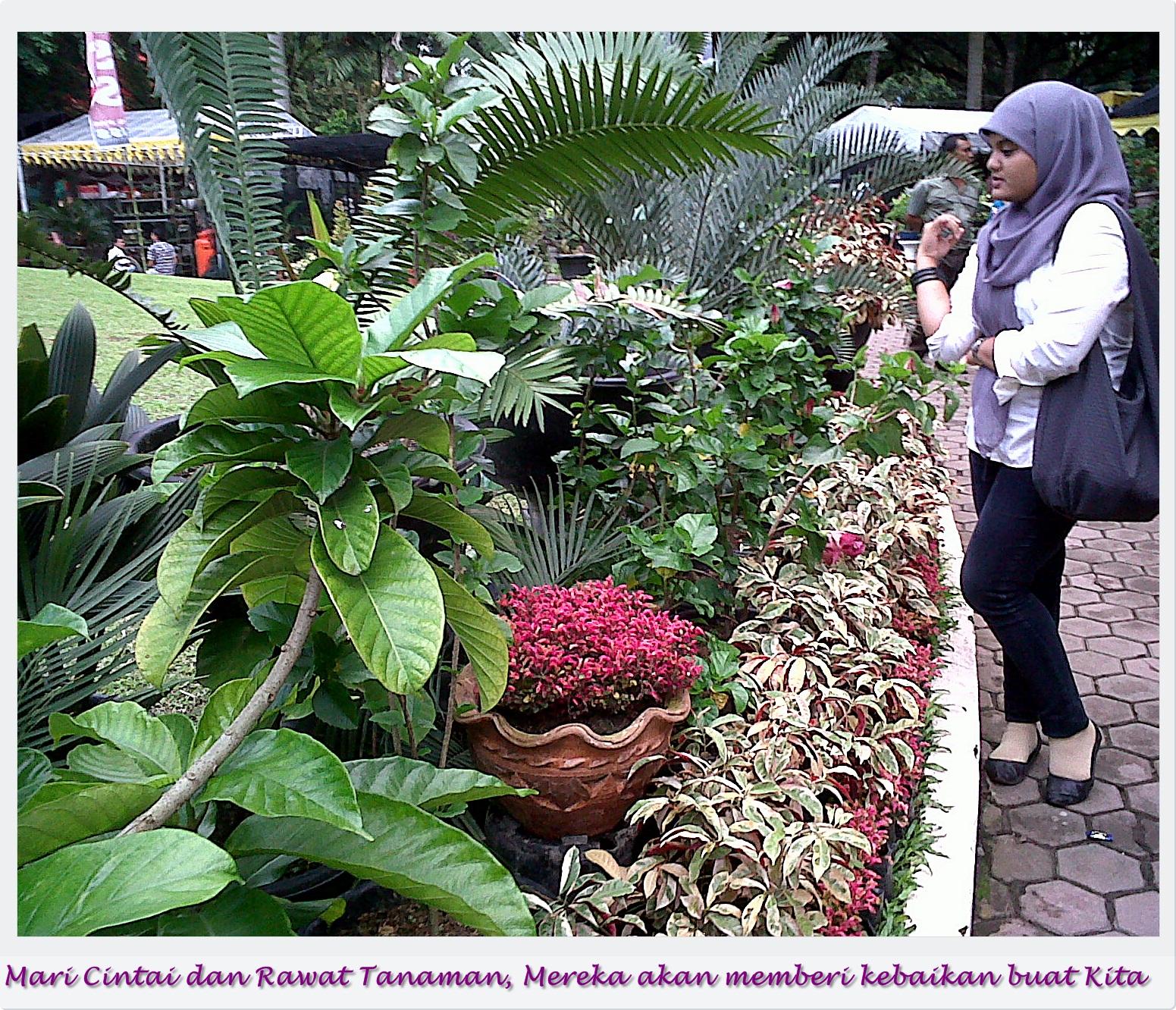 gambar tanaman hias jenis tanaman hias merambat