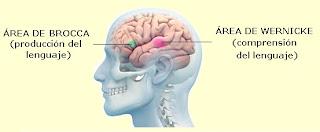 Áreas lingüísticas del hemisferio izquierdo