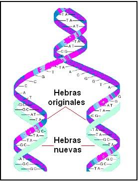 aprende a diferenciar las moleculas del adn y arn
