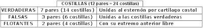 nomenclatura de las costillas