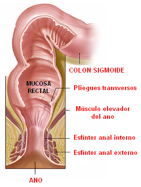 tramo final del intestino grueso