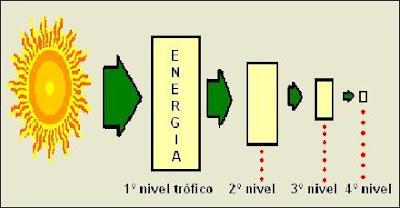 pérdida de energía durante el paso por los diferentes niveles tróficos