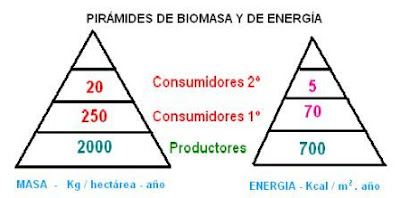 pirámides de biomasa y de energía