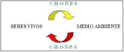 ciclo de los elementos entre el medio ambiente y los seres vivos