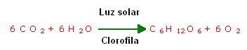 fotosintesis formula quimica