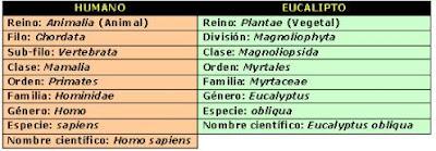 reino dominio bacterias hongos plantas animales cianobacterias arqueobacterias genero especie clase