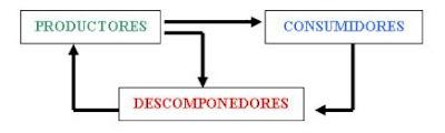 cadenas alimentarias tróficas productor autótrofo consumidor heterótrofo eslabones biología depredador