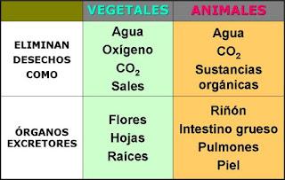 eliminación de desechos en animales y vegetales