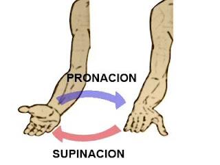 movimientos de pronación y de supinación