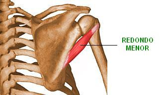 músculo redondo mayor