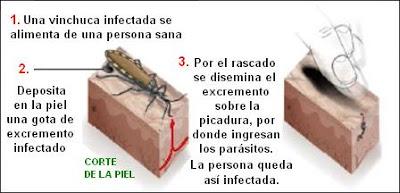 transmisión del agente del mal de Chagas