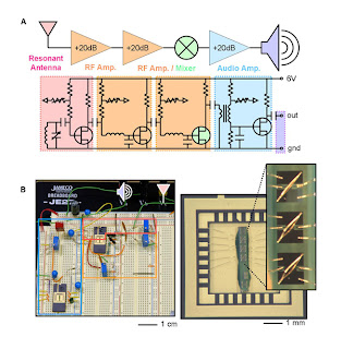 Block and circuit diagrams of a radio that uses carbon nanotubes.