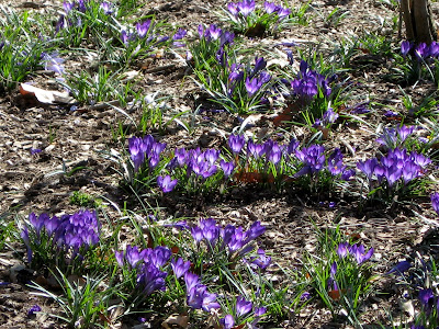 Spring Flowers Clip Art Free. spring flower clip art free.