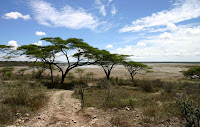 Acacia Tree in the Serengeti, Tanzania, Source Canon EOS 300D, Date December 2004, Author Charles J Sharp, Permission Photographed by author
