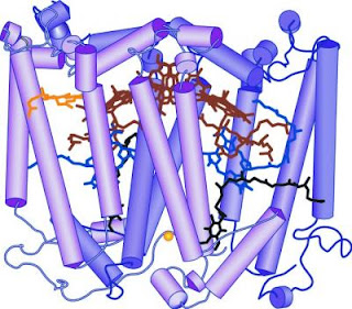 Caption: The structure of the L and M subunits of the photosynthetic reaction center from Rhodobacter sphaeroides (based on PDB entry 1PCR). The protein is represented in purple, the cofactors are represented in red, blue, black and yellow. Credit: Professor Neal Woodbury, Biodesign Institute at ASU, Usage Restrictions: None.