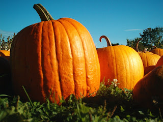 Pumpkins, taken at the Hancock Shaker village.