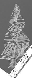 Spiraling pine tree-like nanowires