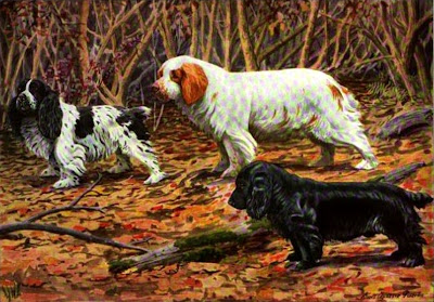 Clumber Field and Cocker Spaniels