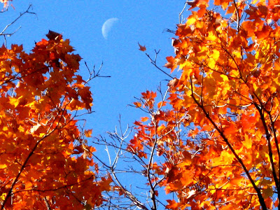 Fall Colors Moon Rise Central Park