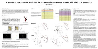 Ape scapula poster without boxes