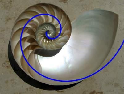 Nova Espiral