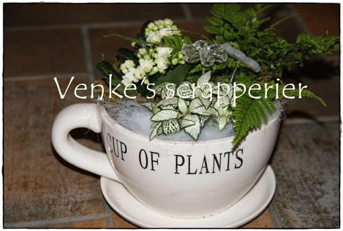 Venke's scrapperier