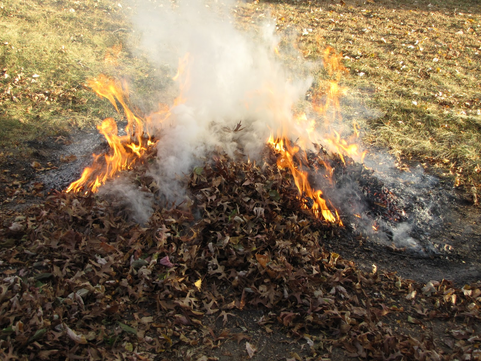 burning leaves should be made illegal Hazards and effects on respiratory health of backyard burning statutes and rules: major illegal burning cases (large piles of refuse, whole structures.
