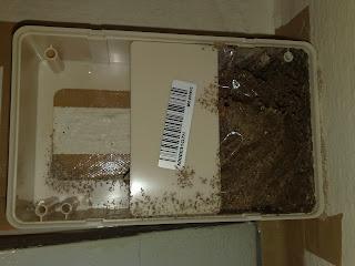 Termite control Sentricon AG Bait Station Before Add Bait