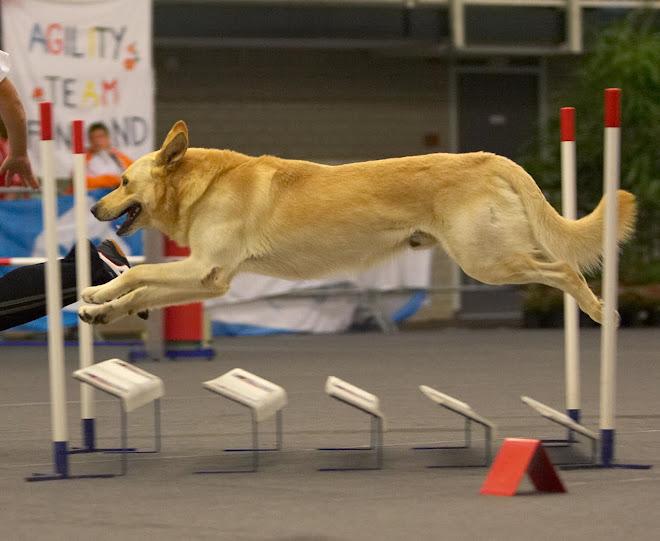 long jump-Mirko at agility