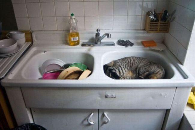 Кот спит в раковине!