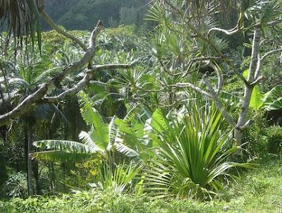 Anse des Cascades - Piton Ste Rose - Ile de La Reunion