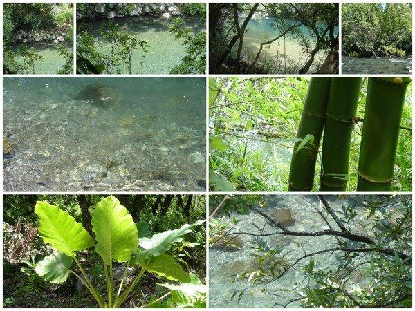 Bassin paradisiaque