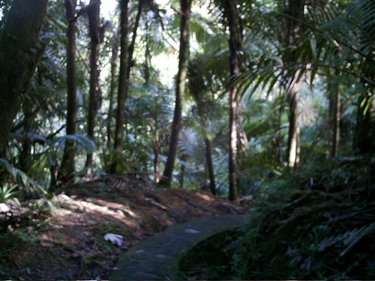 [Torre+Britton+Trail,+El+Yunque+NP.JPG]