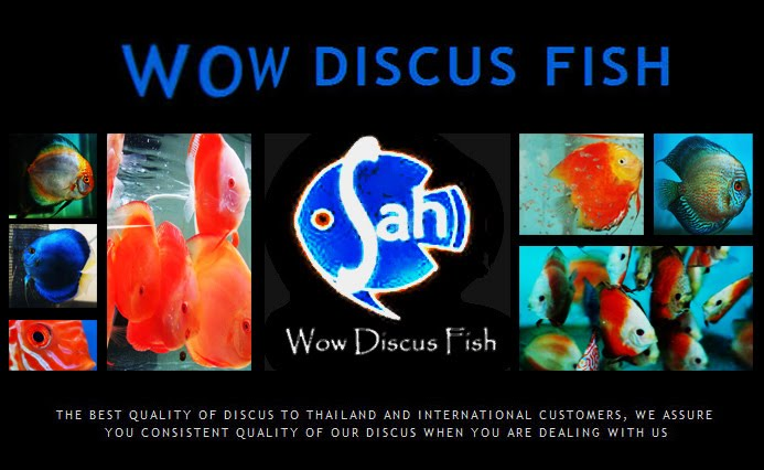 Wow Discus Tips