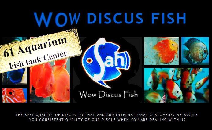 Wow Aquarium!