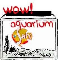 Wow Aquarium