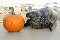 Halloween at the NYC Aquarium