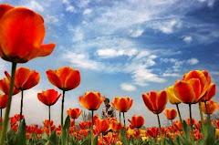 A suavidade é como a flor