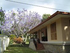 Our Jacaranda tree in full bloom
