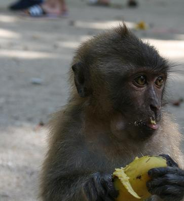 Aww, look at the banana on his mouth! How cute!