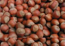 Hazelnut  seeds cashmiriana