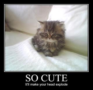 too cute head explodepic cute head explode