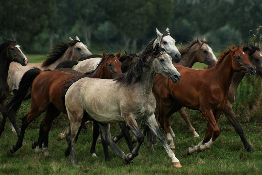 Knowledge era stunning facts about horses