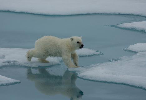 polar bear cub gay bar kaiserslautern ...