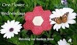 One Flower Wednesday