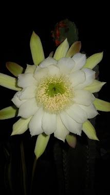 Gracias a la Terapia Homa las flores en nuestro jardin son mas hermosas.