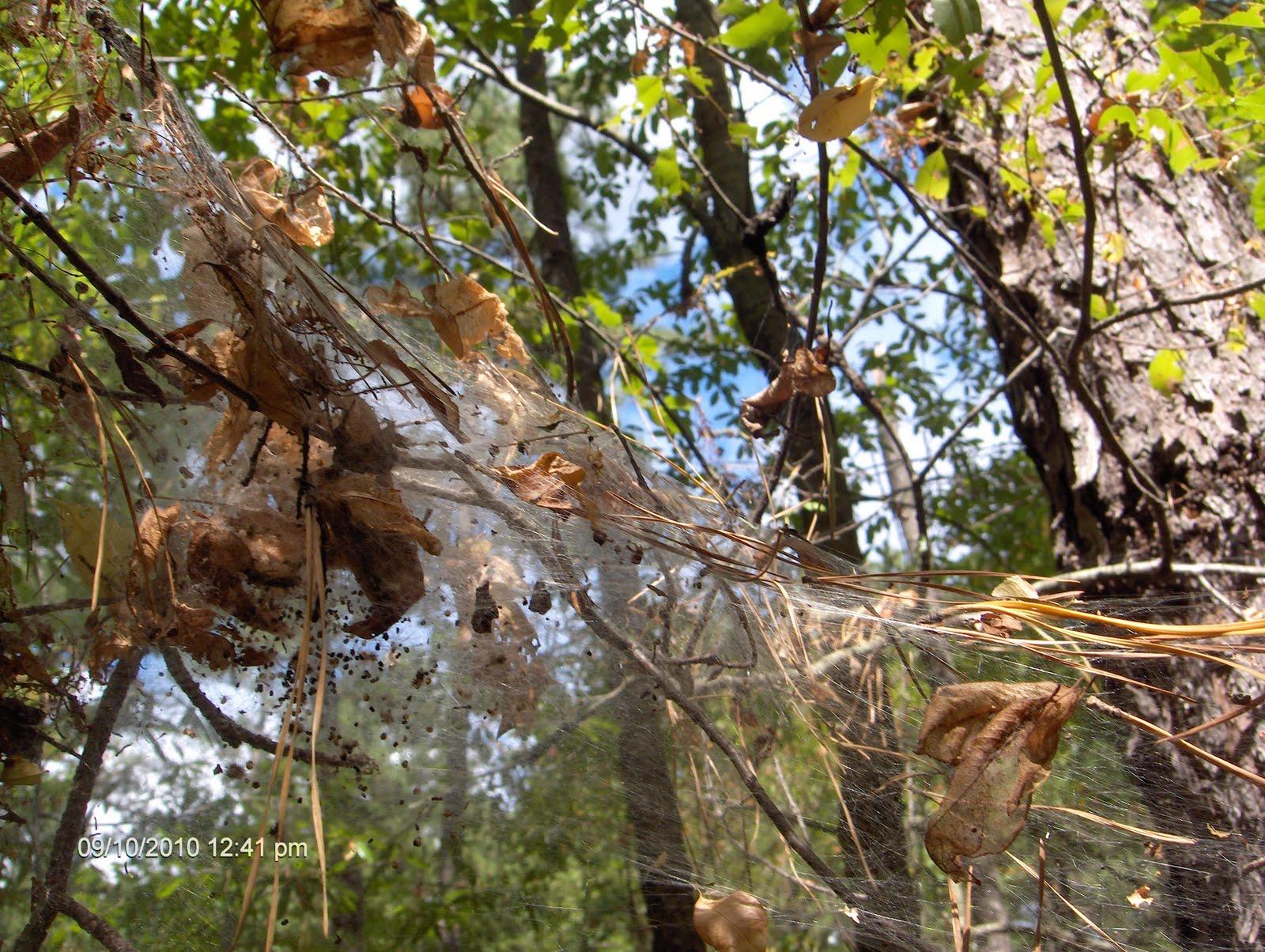 Moth Nest