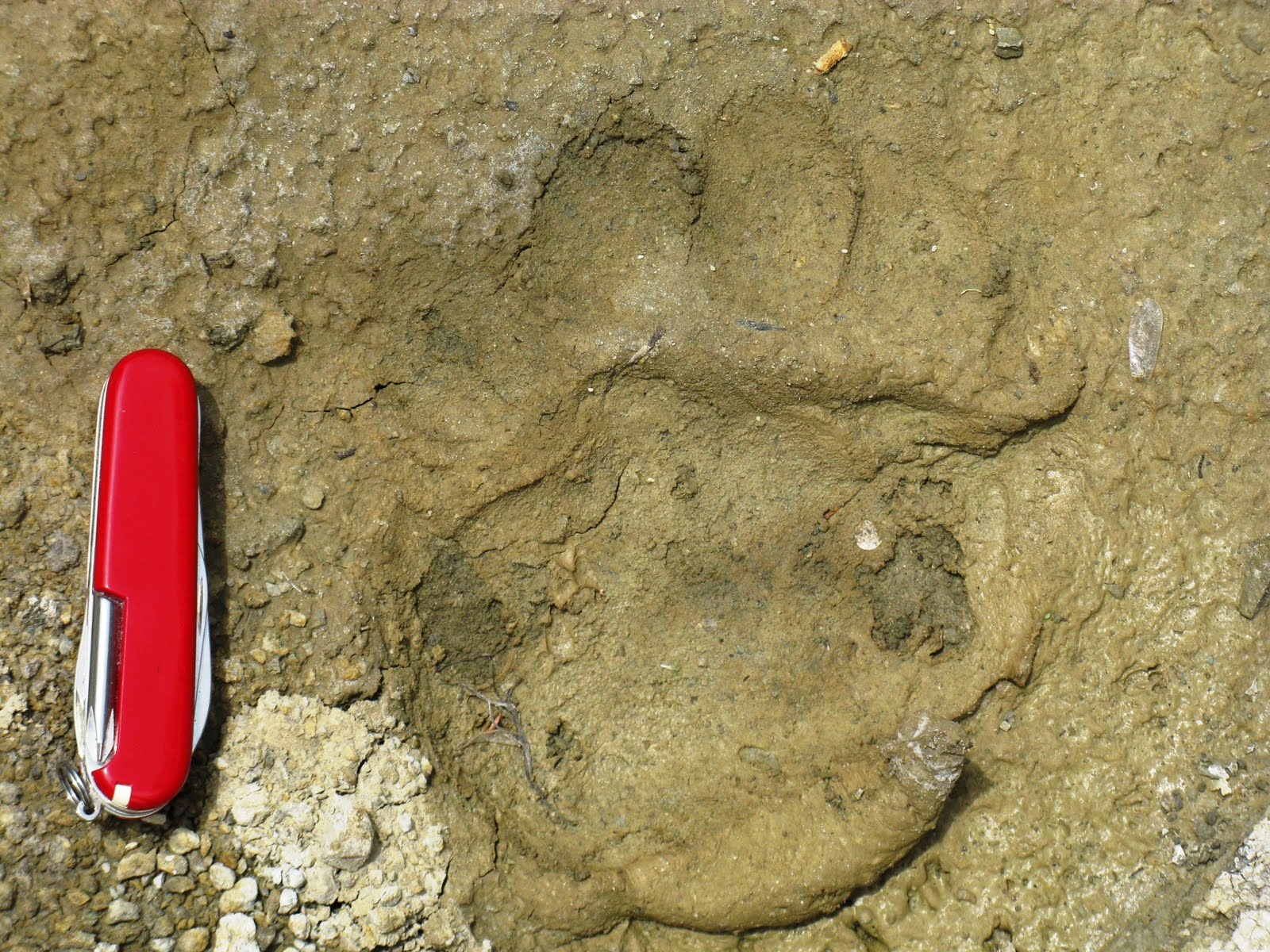 Displaying 19> Images For - Elephant Footprint...